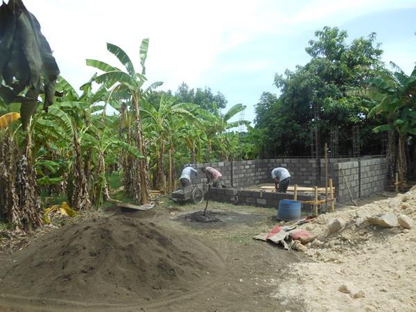 banana trees and walls going up
